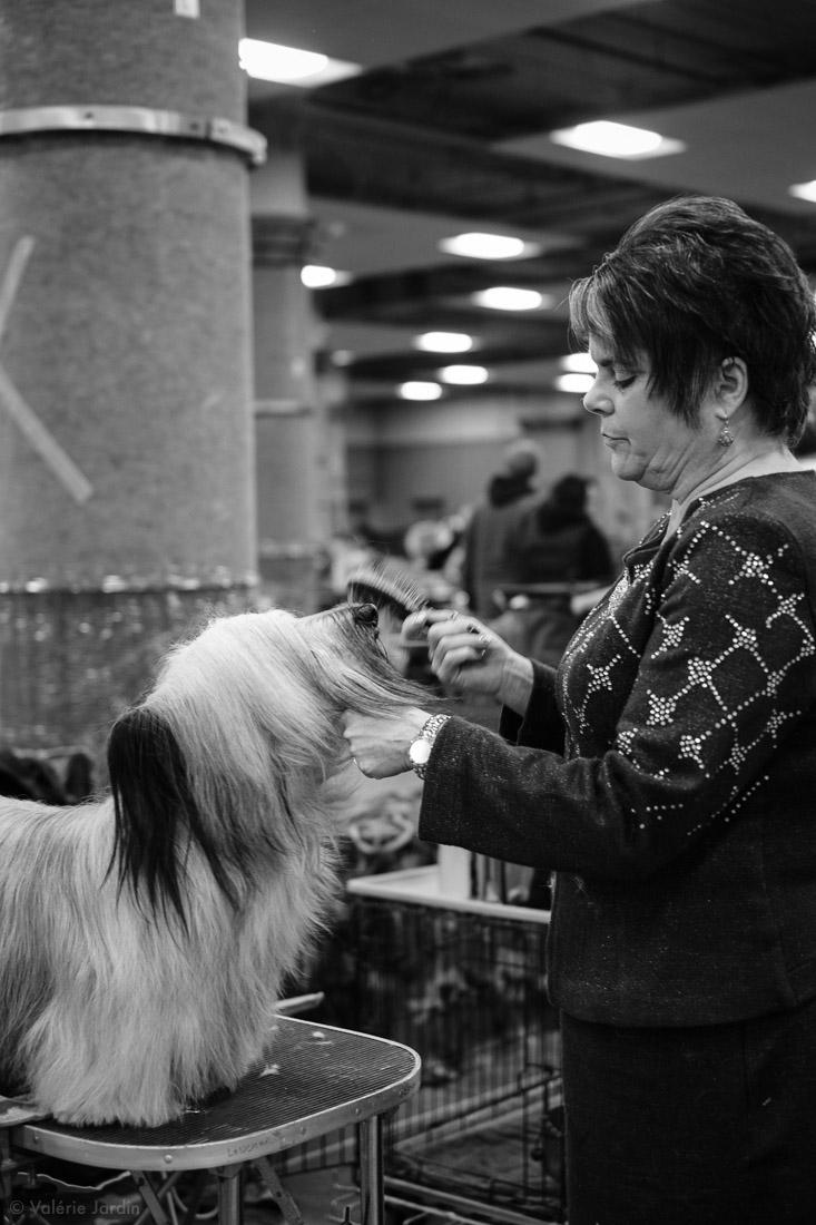 Copyright Valérie Jardin - Dog show-9